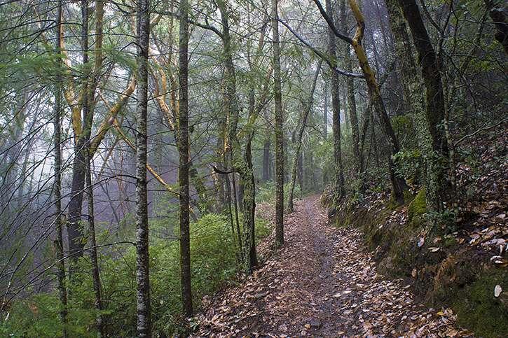 ECDM trail.jpg